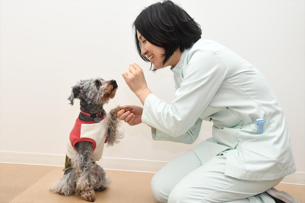 桂_動物看護士とわんこ